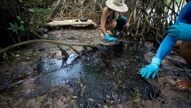 Photo of #Urgente: Caranguejos são encontrados mortos em manguezal do Rio Pojuca; cerca de 800 kg de óleo atingem a região