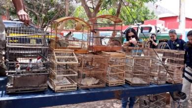 Photo of Animais silvestres são resgatados durante operação em municípios da Chapada Diamantina