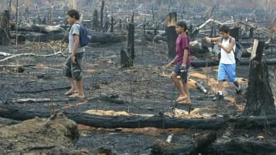 Photo of #Brasil: Incêndios na Amazônia afetam crianças e custam R$1,5 milhão ao SUS, aponta estudo