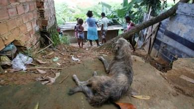 Photo of #Brasil: Pobreza entre pretos ou pardos é maior na Bahia, divulga IBGE em resultado de pesquisa