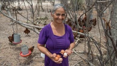 Photo of Projeto do Governo da Bahia para o desenvolvimento rural é classificado como o melhor do mundo
