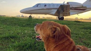 Photo of #Brasil: Cachorro que vivia em aeroporto de São Paulo era procurado pelos tutores há oito meses