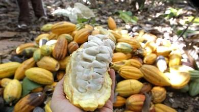 Photo of #Bahia: Em fevereiro, IBGE prevê alta de 6,1% na safra de grãos de 2020 no estado