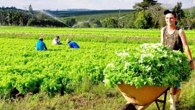 Photo of Agropolo da Chapada Diamantina diz à sociedade que produção de alimentos está dentro do protocolo de prevenção ao coronavírus