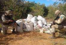 Photo of #Bahia: Homem morre e outro é preso em operação da Polícia Militar que apreendeu meia tonelada de maconha