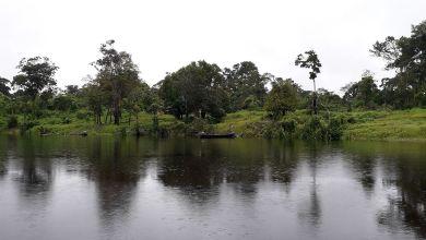 Photo of #Brasil: Embrapa coleta bactérias e fungos com potencial econômico na Amazônia