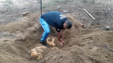 Photo of #Bahia: Policiais civis localizam 100 quilos de maconha enterrados no município de Ipirá