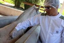 Photo of #Brasil: Anvisa deve receber pedido de registro de soros de cavalos em 10 dias; produto pode tratar covid