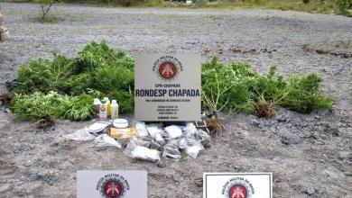 Photo of #Chapada: Três pessoas são presas durante ação da polícia que erradicou roça de maconha em Mucugê