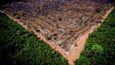 Photo of #Polêmica: Governo Bolsonaro usa dados de gestão do PT de redução do desmatamento para se defender de críticas da França