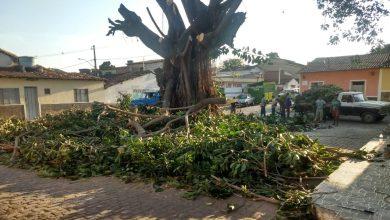 Photo of #Chapada: Poda de árvore de cerca de 60 anos divide opiniões em Palmeiras; parte dos moradores fica indignada