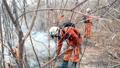 Photo of #Vídeos: Incêndio na vegetação de Barra pode ter queimado mais de 1.500 campos de futebol e atinge povoados
