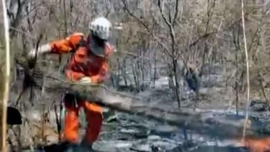Photo of #Bahia: Incêndio queima 30 hectares na região de Barra; origem das chamas pode ser criminosa