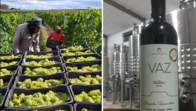 Photo of #Chapada: Vinho Malbec produzido em vinícola do município de Morro do Chapéu ganha prêmio nacional