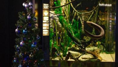 Photo of #Mundo: Aquário nos Estados Unidos usa enguia para gerar energia elétrica a uma árvore de Natal