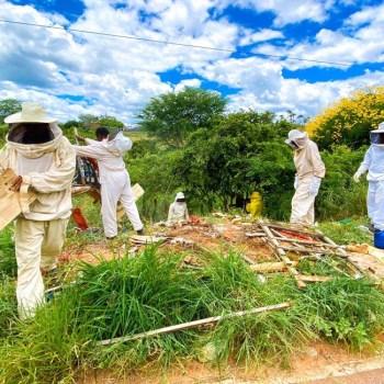 apicultores de boa vista do tupim - foto divulgação 4