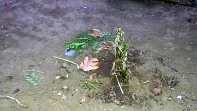 Photo of #Bahia: Polícia prende dupla suspeita de matar homem por causa de celular e enterrá-lo em quintal em Senhor do Bonfim