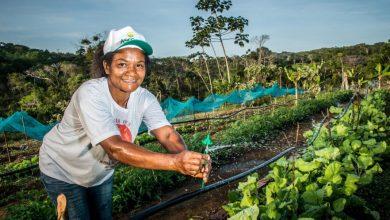 Photo of #Bahia: Garantia-Safra viabiliza continuidade de produção para mais de 44 mil famílias baianas