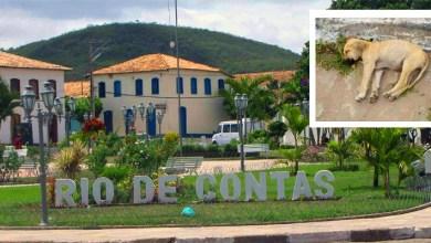 Photo of #Chapada: Animais de rua em Rio de Contas continuam a morrer por envenenamento com chumbinho