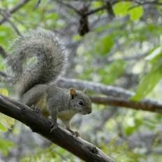 campanha de monitoramento de fauna em Umburanas 4
