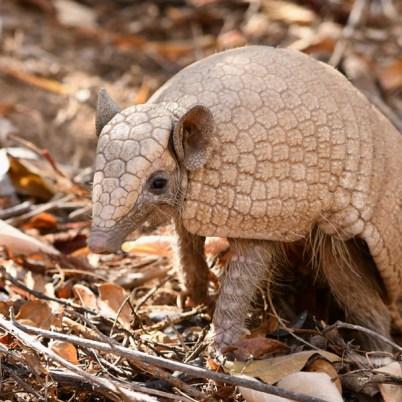 campanha de monitoramento de fauna em Umburanas 5