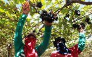 Outras frutas também são produzidas na região | FOTO: Elói Corrêa/GOVBA |
