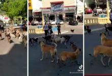 Photo of #Chapada: Cerca de 20 cães assustam moradores no centro do município de Jacobina; veja vídeo de denúncia