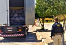 Photo of #Chapada: Condutor é flagrado transportando carvão vegetal de forma irregular em trecho de Seabra