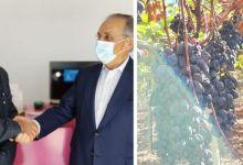 Photo of #Bahia: João Leão visita uma das maiores produtoras de uva de mesa de Portugal neste sábado, a Vale da Rosa
