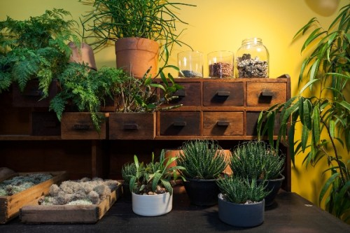 jardim para apartamento suculentas decoracao