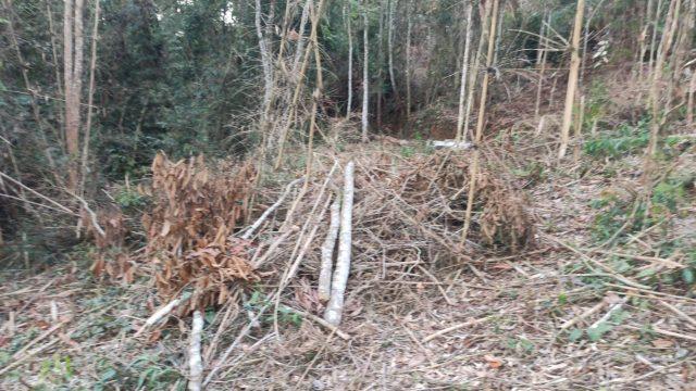 Polícia ambiental encontra 50 árvores da mata atlântica cortadas em Teresópolis