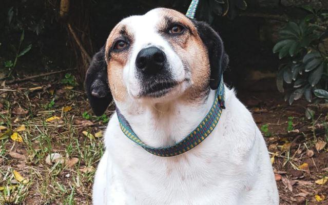 Projeto de proteção animal realiza feira virtual de adoção no próximo domingo
