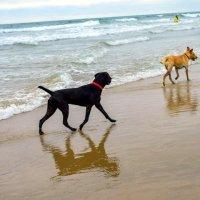 Torres Vedras já tem uma Praia para cães
