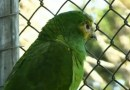 Papagaio roubado volta sozinho a Zoológico de Cascavel dois dias depois do crime