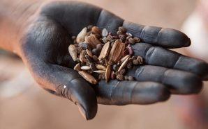 II Feira Mebengokré de Sementes Tradicionais reúne indígenas de mais…