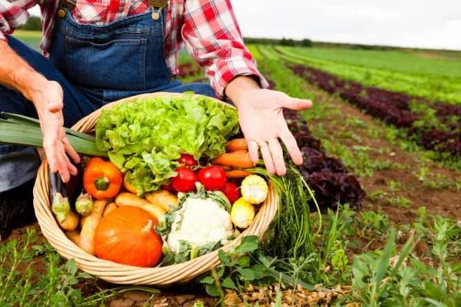 Reduzir para a sustentabilidade: Alimentação