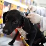 Falta de vacina antirrábica faz municípios de RO cancelarem campanha de vacinação