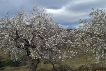 III Rutas Almendro en Flor en Filabres-Alhamilla