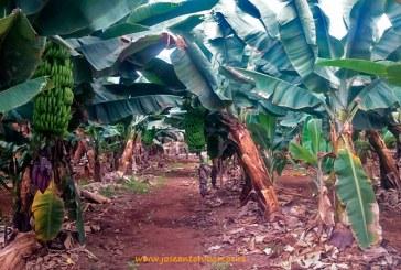 Canarias abandona el mercado de la exportación en hortícolas