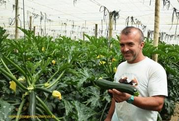 Se regula la venta directa del agricultor al consumidor