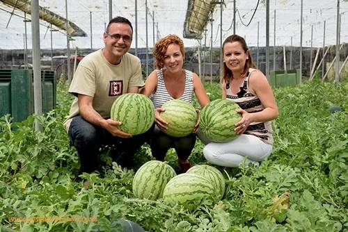Antonio López, técnico de desarrollo; Fátima Gonzálvez, breeder de tomate; y Olga Fernández, administración Agrinature.