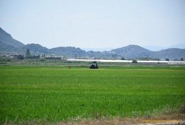 Desde los campos de arroz de Valencia hasta los granados de Alicante