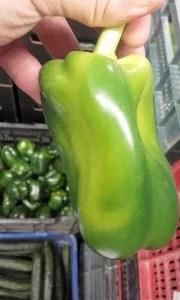 Pimiento lamuyo deforme de color verde.