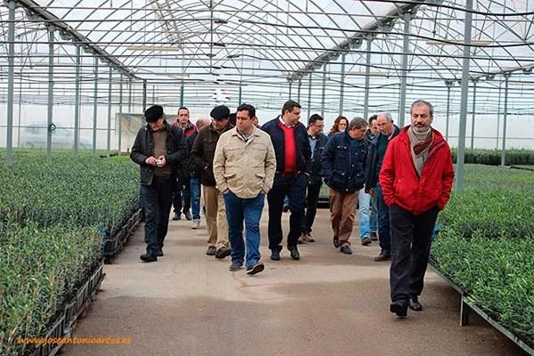 Asehor visita viveros de olivos y cítricos en el Levante almeriense, en Pulpí.