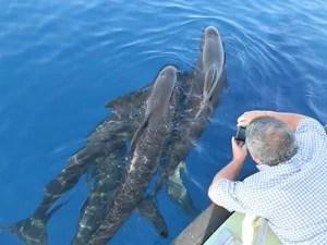 Delfines-Alborán-I