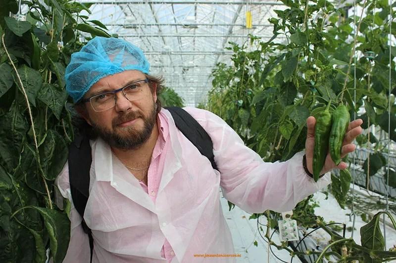 José Antonio Arcos en Holanda en un invernadero de pimientos.
