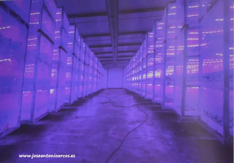 Semilleros con tecnología LED en cámaras de injertos.
