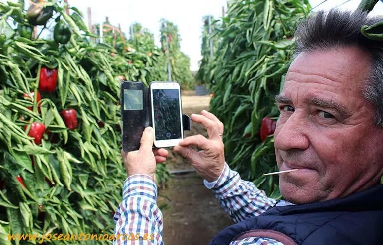 Antonio Moreno, agricultor de Balanegra, fotografiando el pimiento Machado.