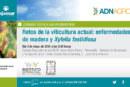 Día 3 de mayo. Jornada 'Retos de la viticultura actual: enfermedades de madera yXylella fastidiosa'