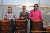 Los Palacios y su tomate sevillano. Una marca con identidad
